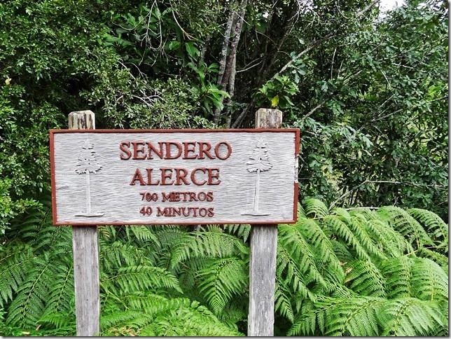 Sendero_de_Alerces_DSC01632