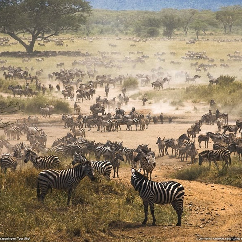 10 Interesting National Parks of Africa
