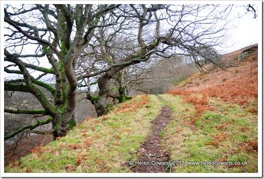 Harthope Valley  walk 2