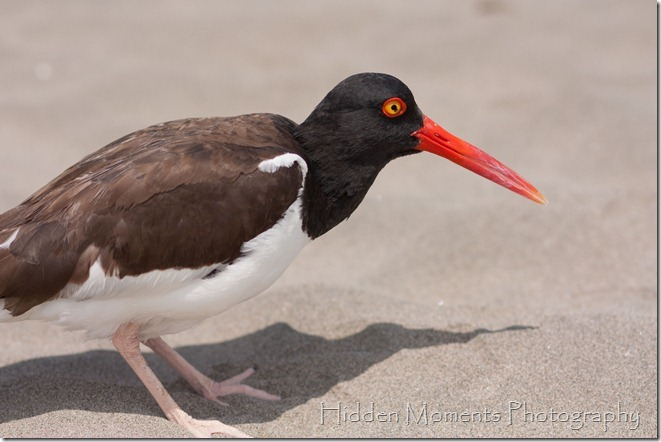 Beach Bird 9