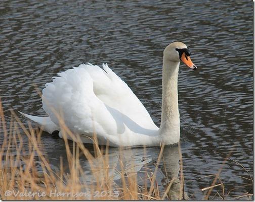 7-swan