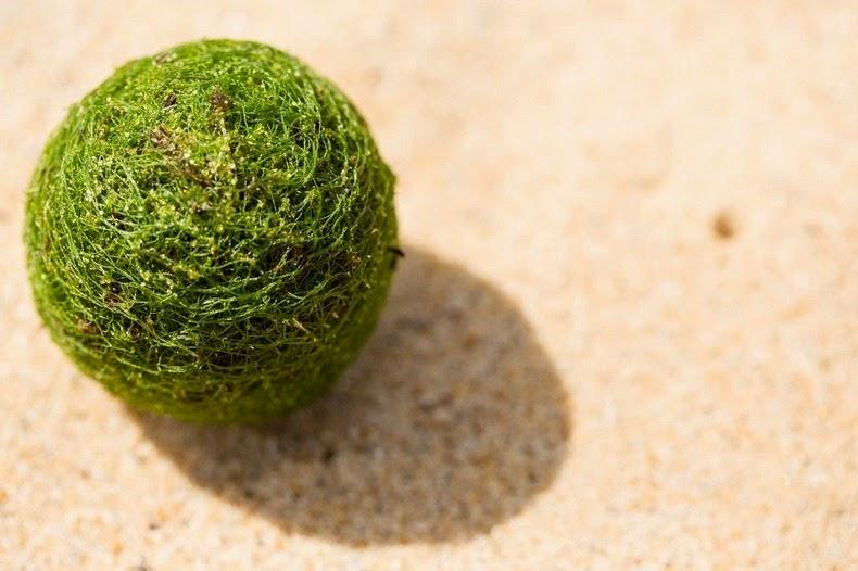 marimo-moss-balls-11