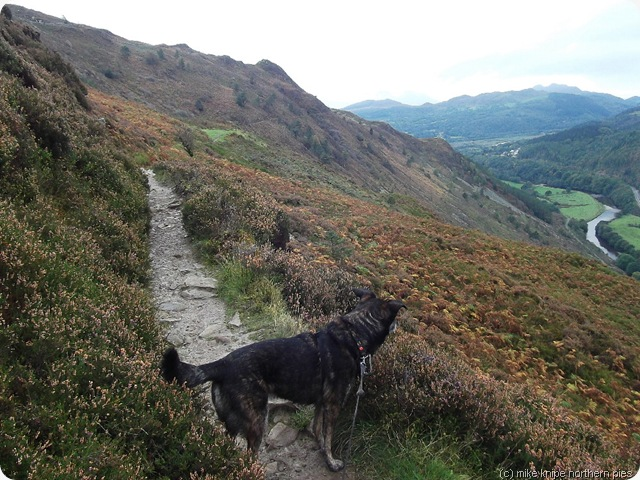 bruno on the precipice walk