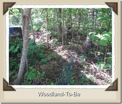 woodlandtobe