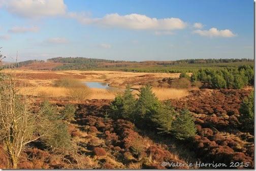 19-Glenwhan-Moor