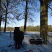 Paard in de sneeuw - www.LandgoedDeKniep.nl