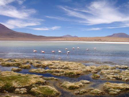 Iunia Pasca: Lac cu flamingo