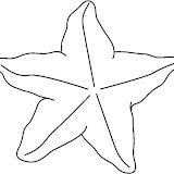 STARFISH4_BW_thumb.jpg