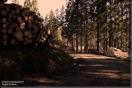 tree_20120408_timber