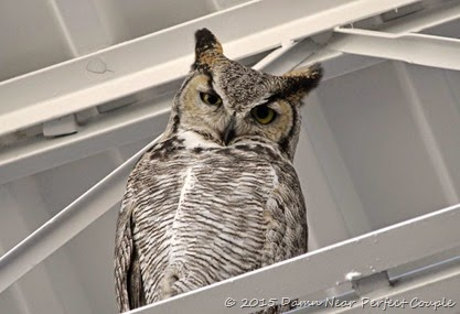 Lowe's Great Horned Ow2l