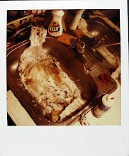jamie livingston photo of the day February 12, 1986  ©hugh crawford