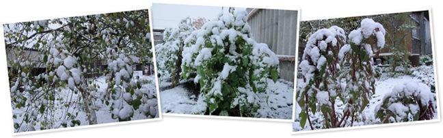 """Просмотр альбома """"снег первый"""""""