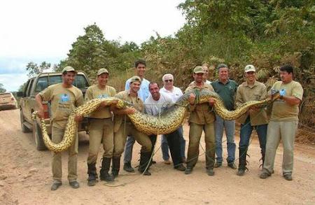 12. anaconda.jpg