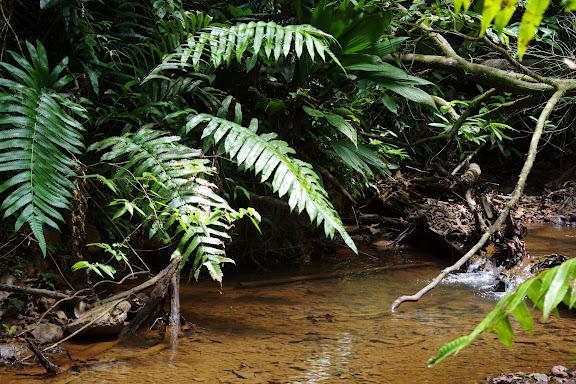 La Crique Yaoni (sentier 2) près des Carbets de Coralie, 31 octobre 2012. Photo : J.-M. Gayman