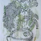 """""""Les plantes et le feu"""" M.Viard"""