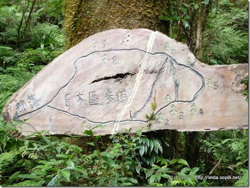 司馬庫斯-day2-巨木群地圖