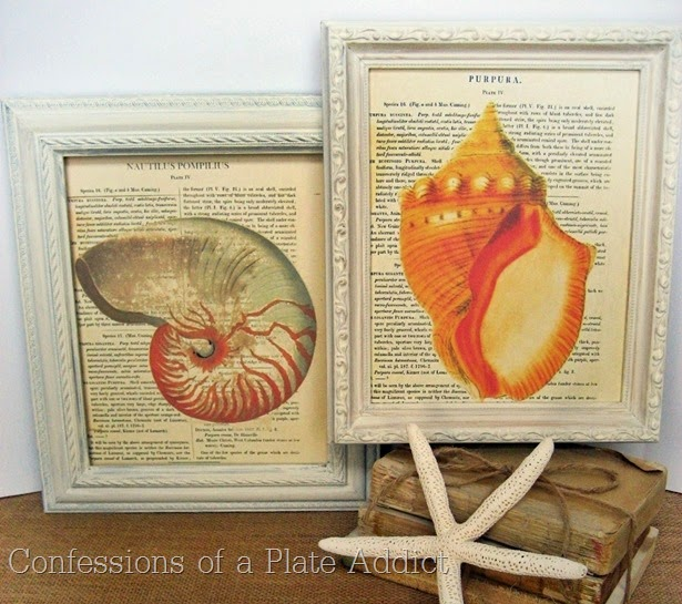 CONFESSIONS OF A PLATE ADDICT Frameable Vintage Seashell Prints