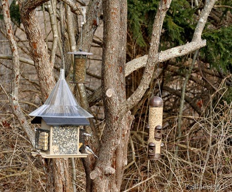 14. 12-21-14 winter bird feeders-kab