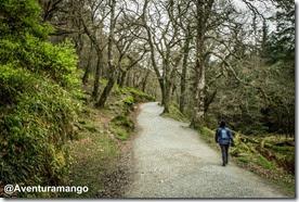 Caminhos bem definidos - Glendalough - Irlanda