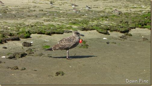 Birding Clamming_027