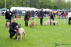 20100513-Bullmastiff-Clubmatch_30894.jpg