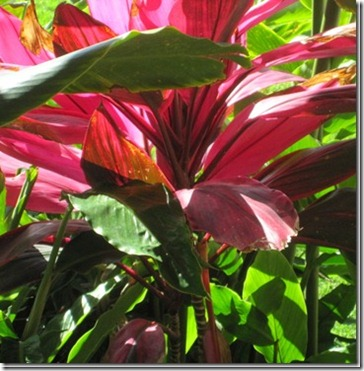 tropicalfoliage_thumb[1]
