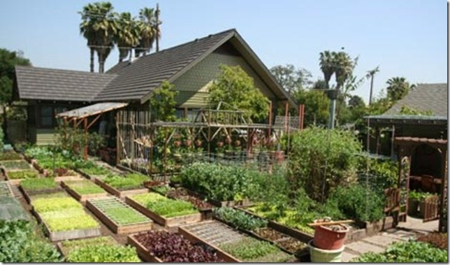 -planted-beds-green-urban-homesteading-family-pasadena-california-susty-farming-energy-business-one-fifth-acre-sustainability-palm-trees-susty-photo