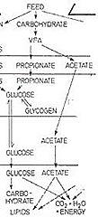 asetat propionat metabolik