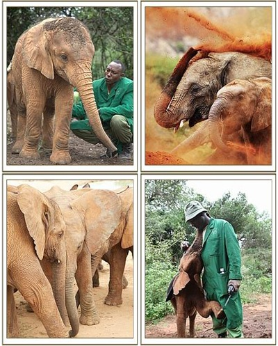 The-David-Sheldrick-Wildlife-Trust