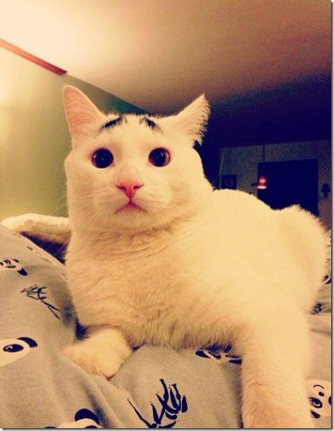 white-cat-eyebrows-18