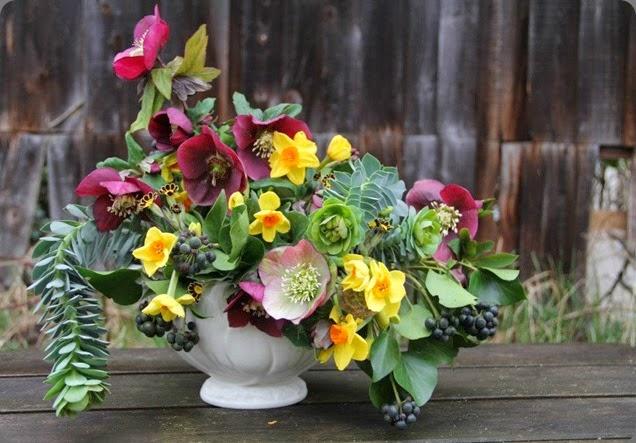 hellebore 563561_523179587726251_551808824_n frida & sophia floral design