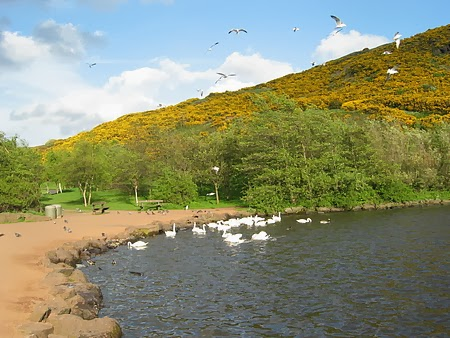 海鷗與池塘