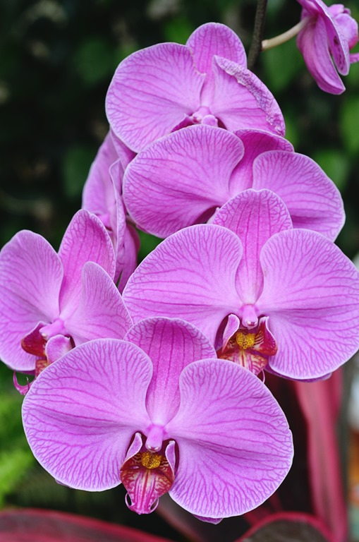 Botanical Garden 022