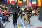 20130511-BMCN-Bullmastiff-Championship-Clubmatch-2316.jpg