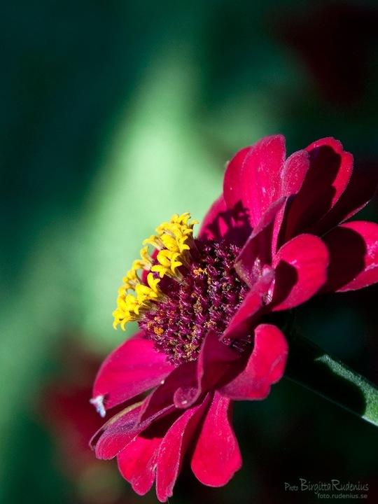 blom_20110816_red1