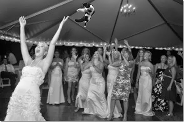 cat-toss-weddings-5