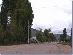 沿道のポプラ
