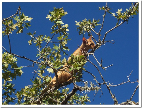 Aslan_Tree