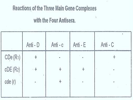 rh-factor-antisera
