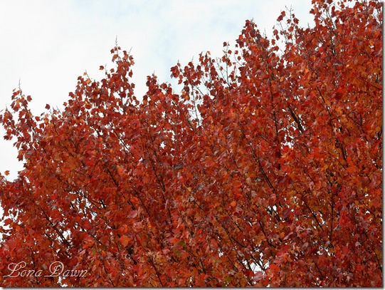 Fall_Red2011