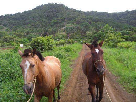 Camaronal_Beach_Horses