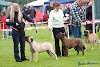 20100513-Bullmastiff-Clubmatch_30885.jpg