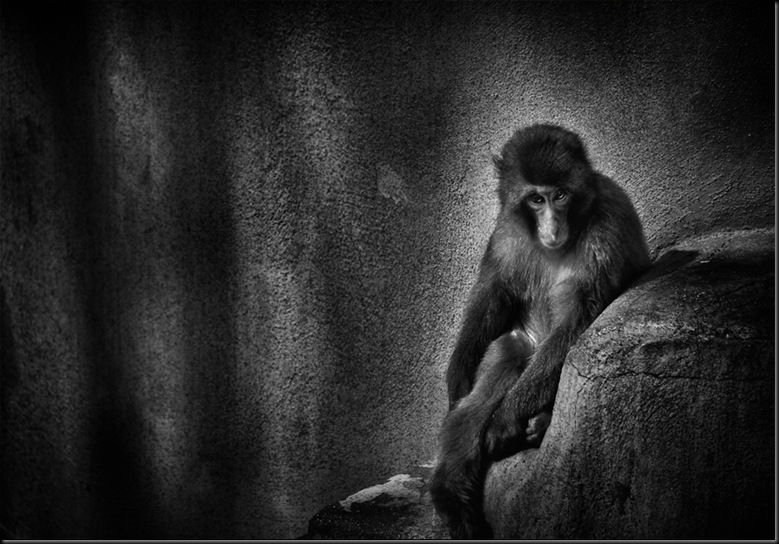 Isolated___ © Antonio Grambone