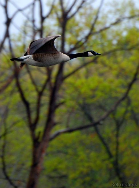 4. Goose-kab