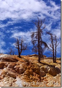 Yellowstone NP and Teton NP 022
