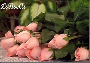 rosas-rosa-LoBocAs-1001