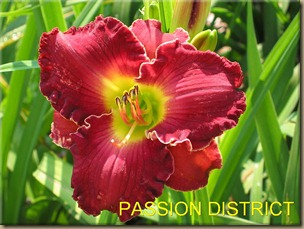 PASSION_DISTRICT_f