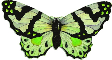 butterflygreen