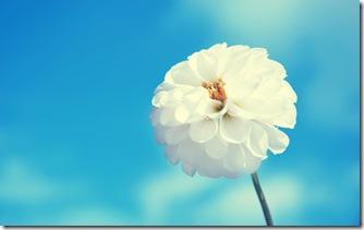 Delicate White Flower