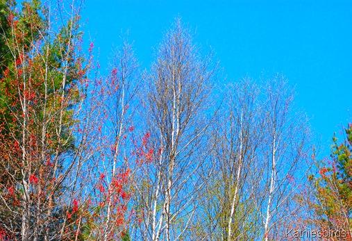 3. tree buds-kab
